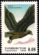 Tajikistan 2006 - Bird - Golden Eagle - Aigles & Rapaces Diurnes