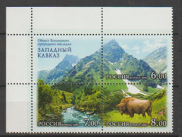 Russie. Russia. 2006. Bison. Buffalo. - Vaches