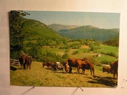 Agriculture - Elevage - Pâturage En Montagne - La Traite - Elevage