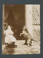 Photo Ancienne Real Foto Petite Fille Little Girl Sans Visage Faceless Et Chien Dog Pet Faisant Le Beau - Photographs