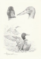 BUZIN. LE CANARD SOUCHET - 1985-.. Pájaros (Buzin)