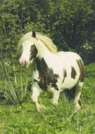 Animals, Horses, Pferde, Konie, Cheval, Cavalli, - Caballos