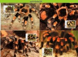 Nfd11mb FAUNA SPINNEN VOGELSPIN SPIDERS TARANTULA CACTUS SUKKULENTEN KAKTEEN ST. KITTS 2012 MAX - Spinnen