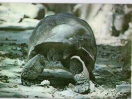 Tortue Zoo Cuba Animaux - Cuba