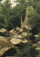 CHAILLE Sous Les ORMEAUX. - La Vallée De L'Yon à Piqué. CPM - Other Municipalities