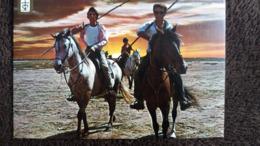 CPSM CHEVAL CHEVAUX LUMIERE ET COULEURS DE LA CAMARGUE LE RETOUR DES GARDIANS BLASON ED DINO 1982 TOILEE - Chevaux
