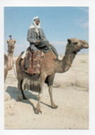 Israel: Camel In The Desert, Desert De Judee, Chameau (19-1803) - Israel