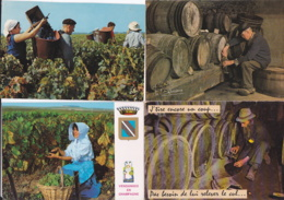 Vignes -- Lot De 15 Cartes - Viñedos