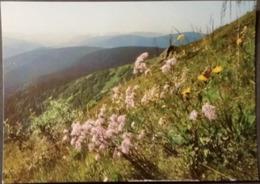 Ak Tschechien - Blumen Aus Dem Riesengebirge - Prachtnelke - Blumen