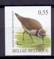 3267 Kleine Plevier Buzin Vogel ONGETAND POSTFRIS** 2004 - Belgique