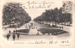 FR34 MONTPELLIER - ND 8 - Précurseur - L'esplanade - Animée - Belle - Montpellier