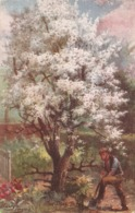 "Harry Payne. The Pear Tree"" Tuck Oilette Blossom Time Series PC # 10056 - Tuck, Raphael"