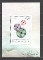 M1025 2013 MICRONESIA SEASHELLS 1BL MNH - Coneshells