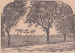 972. FORT-DE-FRANCE. La Gande Savane Et La Statue De L'Impératrice Joséphine. 1892 - Vieux Papiers
