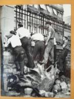 TIREURS GRILLES SOUCHE D'ARBRE LIBERATION DE PARIS GUERRE WW2 PHOTO DE PRESSE 24 X 18 Cm PHOTO PRESSE LIBERATION - Guerre, Militaire