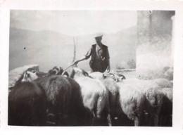 Photographie Circa 1940-1950 Berger Corse Et Son Troupeau à Alzi Ou San Damiano (autres Photos De Cette Série Localisées - Lugares