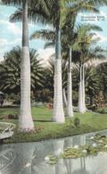USA Hawai Honolulu Moanalua Park - Honolulu