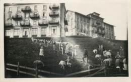 Suisse - Carte-Photo - Lucerne - Rigi Kulm - Hôtel Sur Les Hauteurs - LU Lucerne