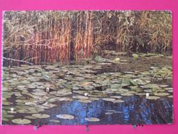 Roumanie - Tulcea - Végétation Aquatique Du Delta Du Danube - Jolis Timbres - Scans Recto Verso - Roumanie