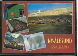 AANT-275 POLAR 1987 NY-ALESUND NORWAY  CRUCER SVALBARDREIN CARD - Polare Flüge