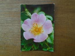 Jolies Fleurs De France , églantine - Bloemen