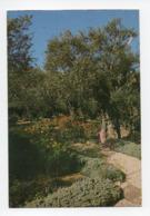 Israel: Jerusalem, Garden Of Gethsemane (19-1829) - Israel