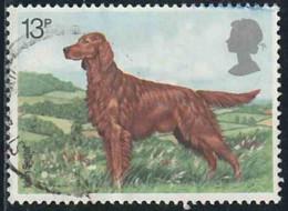 """GB 1979 Yv. N°883 - Exposition Canine """"Crufts Dog Show"""" - 13p Setter Irlandais - Oblitéré - Oblitérés"""