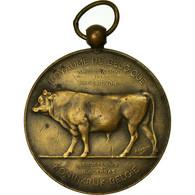 Belgique, Médaille, Agriculture, Amélioration De La Race Bovine, Namur - Belgique
