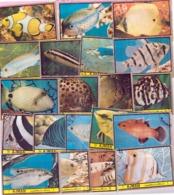 Collection Of 20 Fish Stamps CTO Fishes Marine Freshwater Aquarium Fauna Wildlife Wetlands Biodiversity - Briefmarken