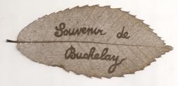 FEILLE D'ARBRE AJOUREE / ARTISANAT MILITAIRE / DENTELLE DE FEUILLE D'ARBRE SOUVENIR DE BUCHELAY  E21 - 1914-18