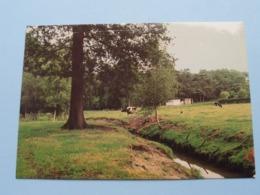 DROSSAARDPAD Omgeving Van De Hutten ( 14 ) Middenstand Meerhout : Anno 1993 ( See / Voir Photo ) ! - Meerhout