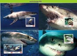 Nfd15mb FAUNA 'VISSEN FISH FISCHE' WITTE HAAI MENSENHAAI GREAT WHITE SHARK HAIE MARINE LIFE SAMOA 2014 MAX - Meereswelt