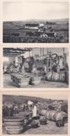 279749Moet & Chandon, Scène Vendange à Le Mesnil Sur Oger Nr.4 – Le Vendangeoir De La Maison à Bouzy Nr.5 – Sc`ene De - Viñedos