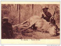 Carte Postale Saigon La Chasse En Indochine  Mort D'un Taureau Sauvage Trés Beau Plan - Viêt-Nam