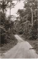 Boma - Dans La Forêt Du Mayumbe - Congo - Kinshasa (ex Zaire)