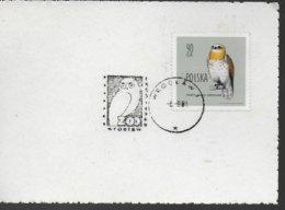 POLOGNE  Carte 1981 Oiseaux Hiboux Chouette - Owls