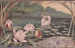 Illustrateur E.S.W., Etang, Cygne Et Nénuphar, Litho Couleurs (24.5.1901) - Illustratori & Fotografie
