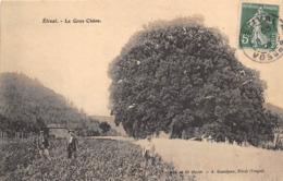88-ETIVAL- LE GROS CHÊNE - Etival Clairefontaine