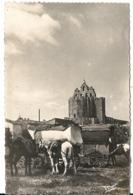 CAMPEMENT DE GITANS - Saintes Maries De La Mer