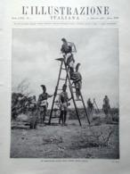 L'Illustrazione Italiana 17 Febbraio 1935 Istria Fanteria E Cavalleria D'Ancona - Libri, Riviste, Fumetti