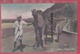 YEMEN-----ADEN---Camel Cart - Yémen