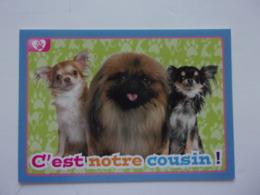 PANINI ANIMAL WORLD Animaux N°461 Chien Dog Hund Perro Kutya - Edition Française