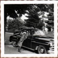 Petite Photo Originale Cadillac, Chevrolet, Vieille Américaine à Identifier Vers 1950 & Chien Setter Irlandais Rouge - Automobiles