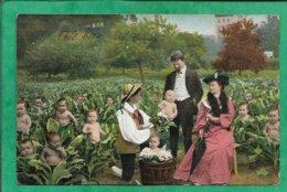 Couple Bourgeois Qui Choisit Leur Petit Garçon Bébés Dans Des Choux Un Chou 2scans 29-04-1905 Dos Simple - Cartes Humoristiques