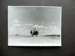Fotografia Originale Carro Con Buoi Gebel Cirenaico Libia Colonizzazione 1938 - Foto