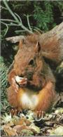 Carte - Merveilles Du Monde - Nestle - Animaux De Chez Nous - N° 74 - L'ecureuil - Trading Cards