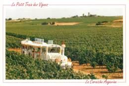 49 - CHALONNES SUR LOIRE - LE PETIT TRAIN - Chalonnes Sur Loire