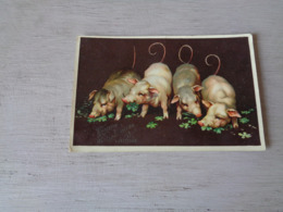 Cochon ( 60 )   Varken  Zwijn  Année  Jaartal  1909 - Pigs
