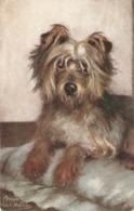 """Maud West Watson. Pet Dogs. The Yorkshire   Terrier"" Tuck Oilette PC # 9889 - Tuck, Raphael"