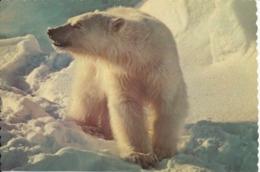 USA Postcard Polar Bear Local Post Deadhorse Alaska 11-7-1983 - Other